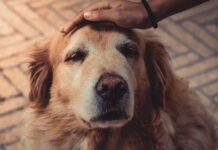 veneto-niente-piu-costi-per-le-cure-del-cane-da-oggi-saranno-gratis
