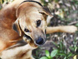 cane che si gratta il muso