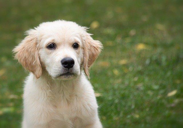 10 segnali che il tuo cane è geloso