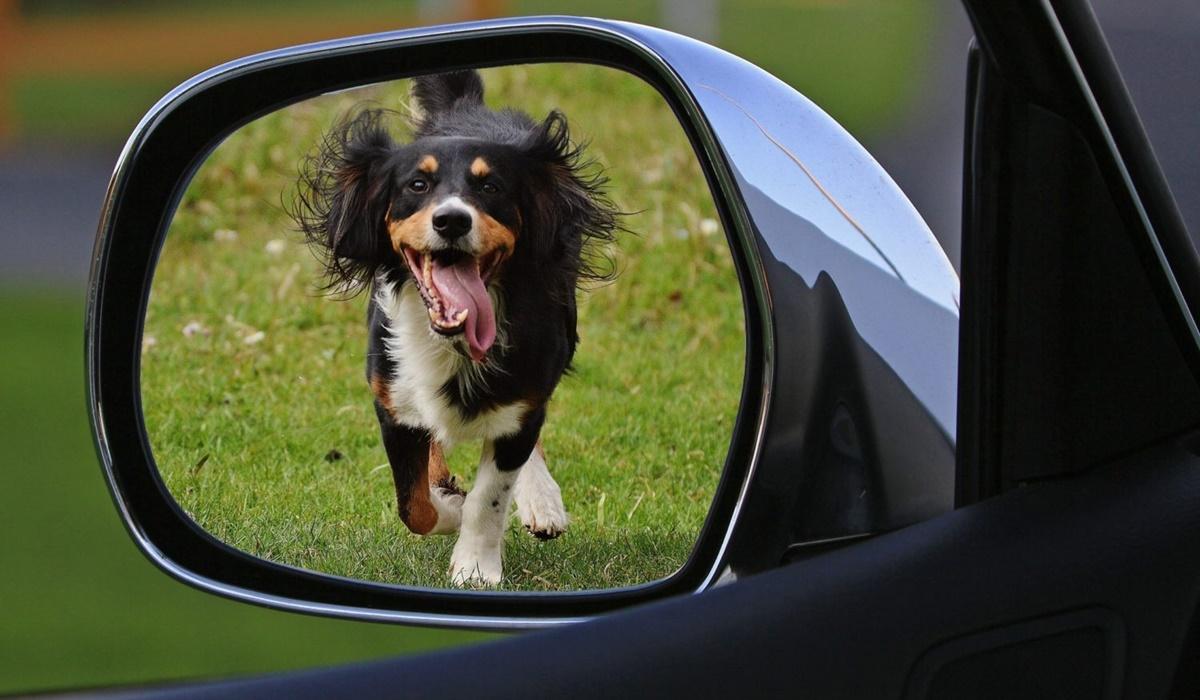cane insegue una macchina