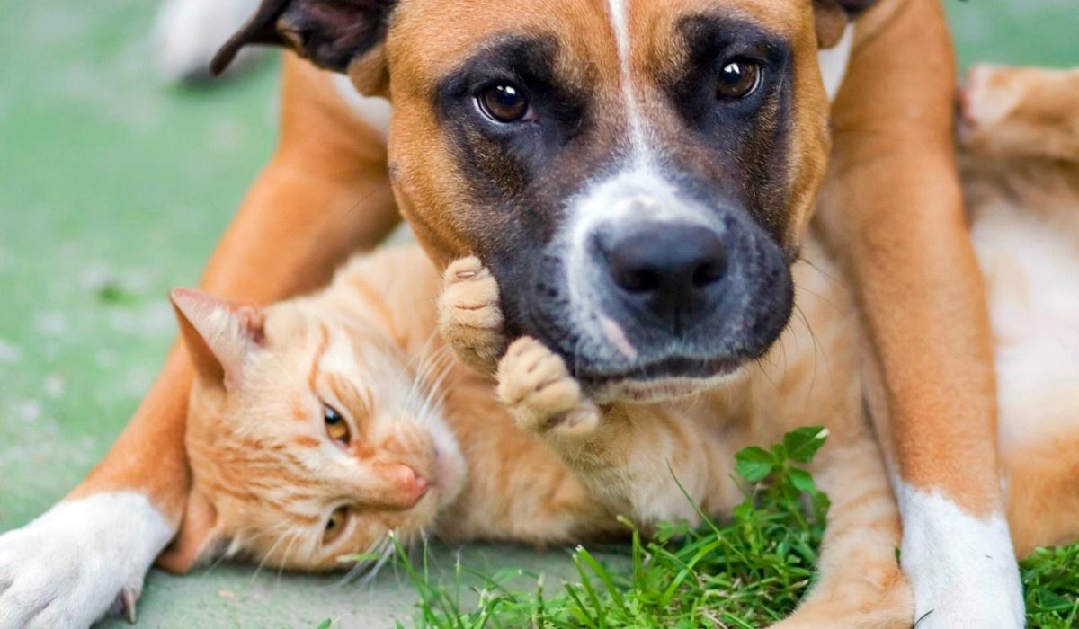 cane e gatto giocano insieme