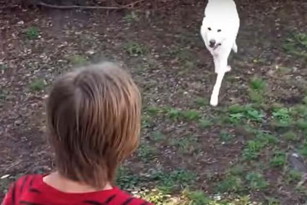 Cane con un ragazzino