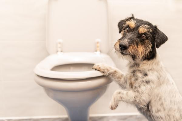 Cosa sapere sul tuo cane di 6 anni: tutte le cure e le necessità