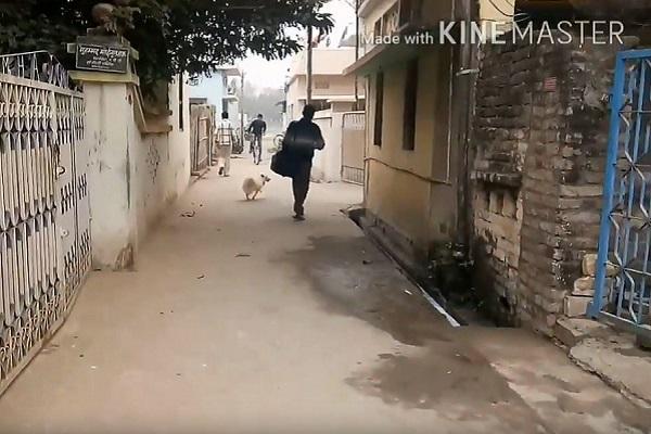 Cane rivede il suo padrone dopo sei mesi: l'incontro commovente – VIDEO