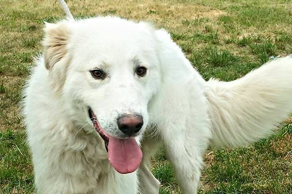 Ermanno, il cane che a Nereto ha vegliato per 3 giorni il proprietario defunto