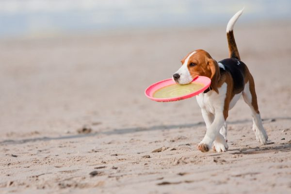 Esercizi mentali per i cani che faranno felice Fido