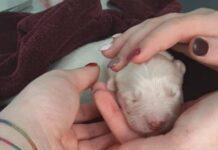 cane molto piccolo