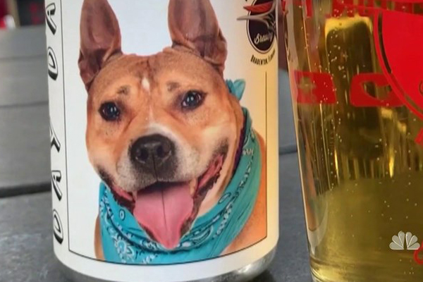 Hazel, il cane ritrovato grazie ad una lattina di birra