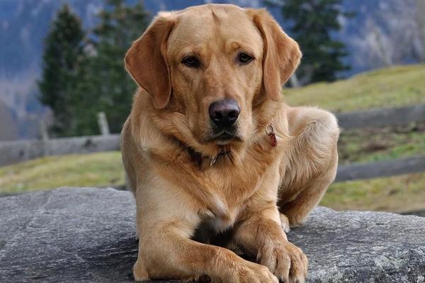 "Joy, il cane che a Sondrio raccoglie i rifiuti e fa la ""Dogferenziata"""