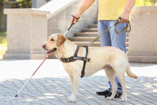 cane che accompagna una persona non vedente