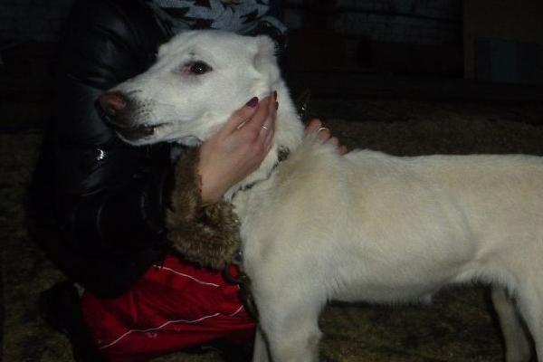 Marvin, il cane che dopo due abbandoni e 2000 Km è finalmente felice
