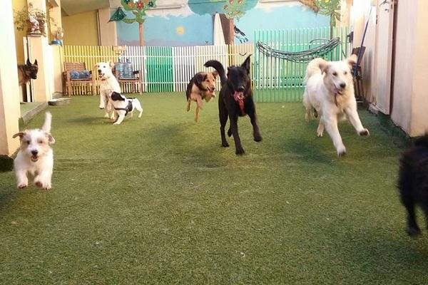 Milano, Happy Bau: l'asilo per cani a misura di quattro zampe