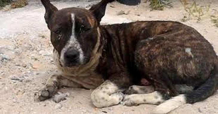 Il cane con il cuore spezzato aspetta l'aiuto di qualcuno per un anno intero