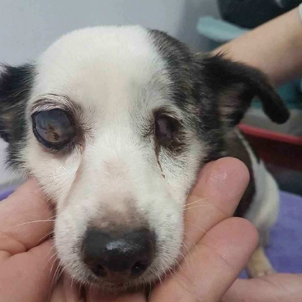 Cane cieco e malato viene salvato dai maltrattamenti del proprietario