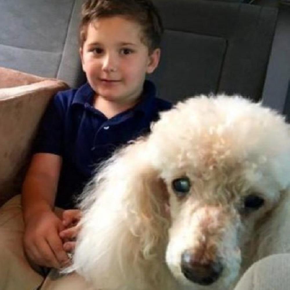 Il cane, prima di spegnersi, regala un ultimo sorriso al suo proprietario
