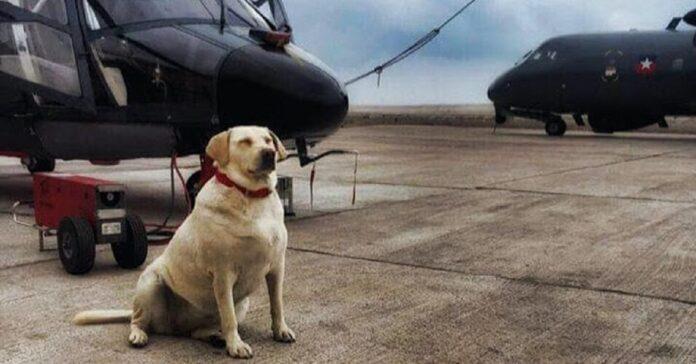 cane-abbandonato-per-strada-diventa-membro-della-marina-cilena