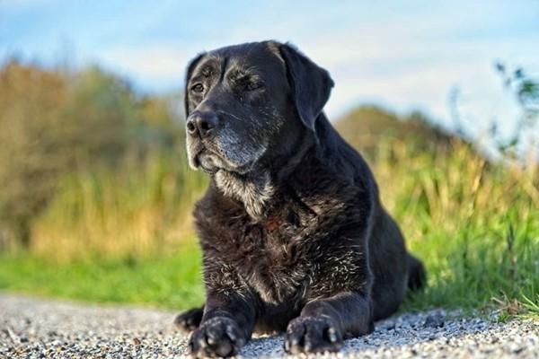 cane che riposa all'aria aperta