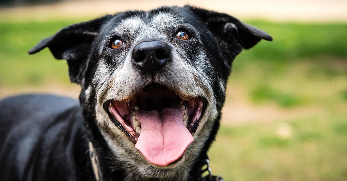 cane felice che guarda il suo padrone