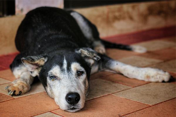 Cosa sapere sul tuo cane di 16 anni: tutte le necessità e le cure