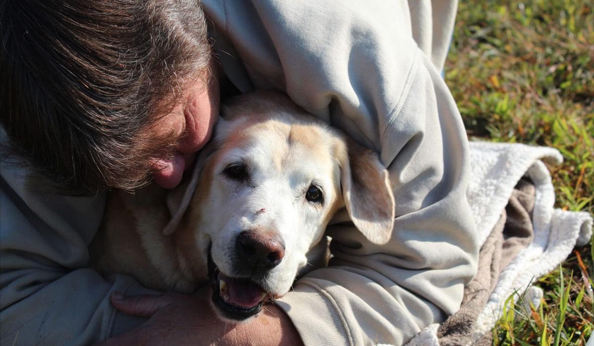 Cosa sapere sul tuo cane di 17 anni: cure, attenzioni e bisogni
