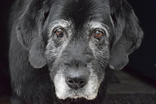 Cosa sapere sul tuo cane di 18 anni: tutte le cure, i dettagli, le attenzioni