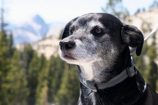 cane anziano deve fare passeggiate