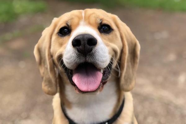 cane con l'espressione simpatica