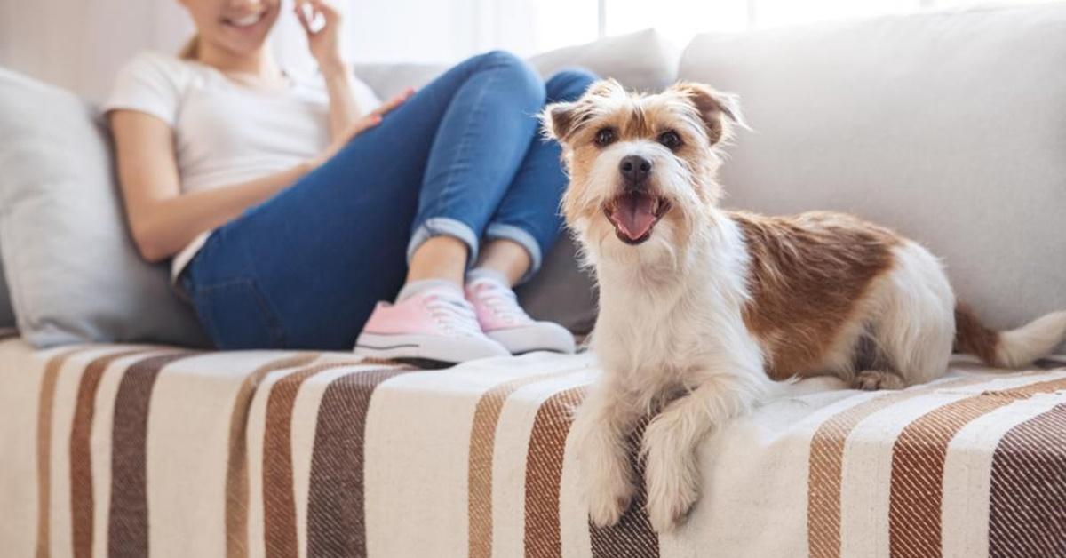 cane che riposa sul divano