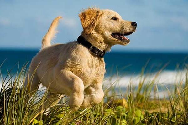 cane che corre in spiaggia