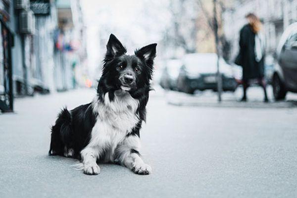 Cosa sapere sul tuo cane di 8 anni: cure, attenzioni e dettagli