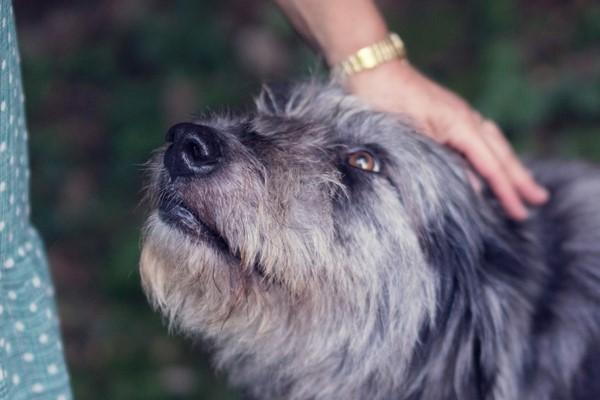 accarezzare la testa del cane