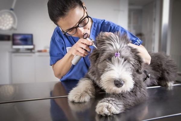 visita del cane dal veterinario