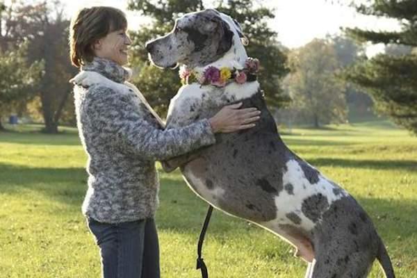 Cane di un amico in casa: come accudirlo al meglio