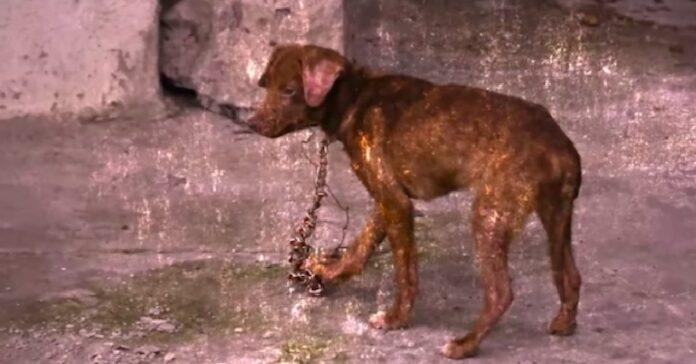 cane-salvato-furtivamente-dalle-grinfie-della-proprietaria-durante-la-notte
