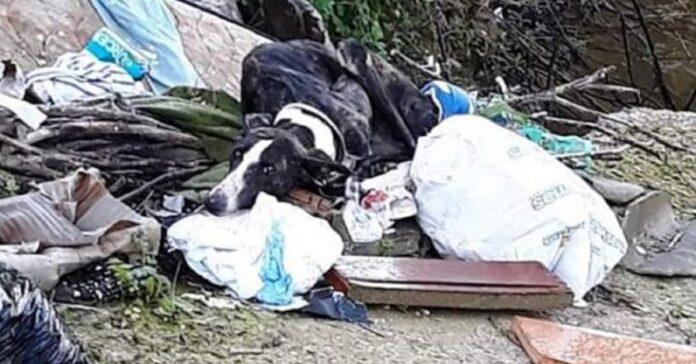 cane-stanco-ed-affamato-viene-trovato-e-salvato-da-una-fine-ignobile