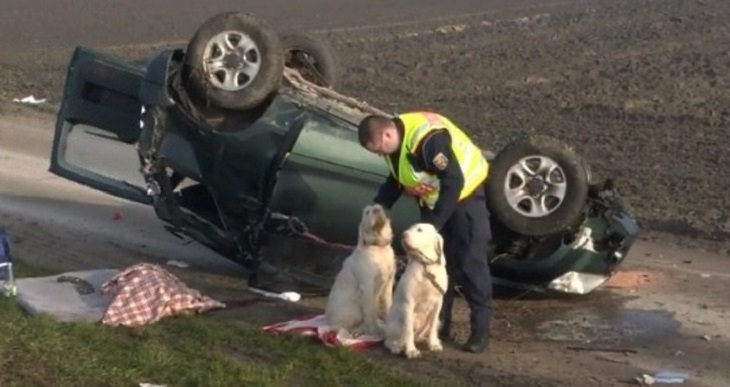 cani-incidente-ospedale