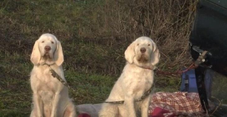 cani-incidente-salvi