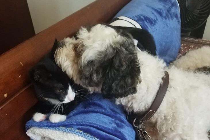 Il cane viene investito ma un uomo agisce tempestivamente e lo salva