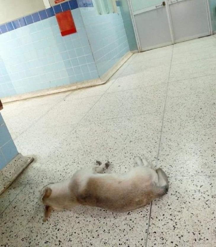 Il cane aspetta il proprietario in ospedale per circa un mese, poi la notizia