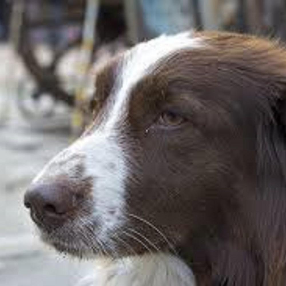 cheeto-cane