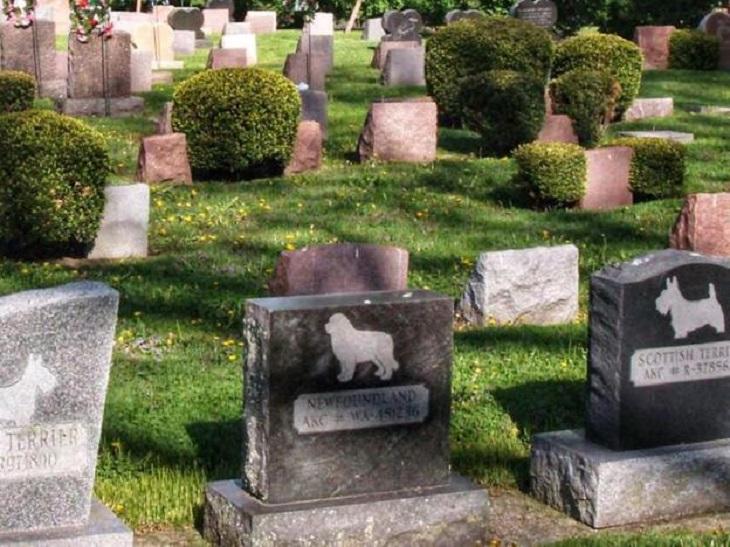 Il cane venuto a mancare viene seppellito, ricompare alcuni giorni dopo