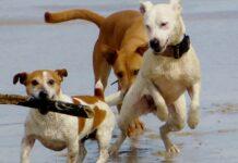 cani che giocano in spiaggia