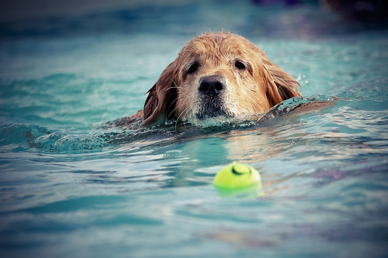 cane in acqua con pallina