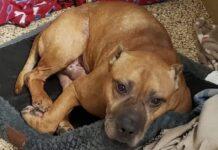 cucciolo-abbandonato-davanti-la-porta-di-casa-sua