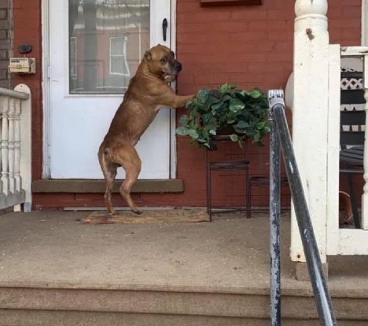 Cucciolo abbandonato davanti la porta di casa sua