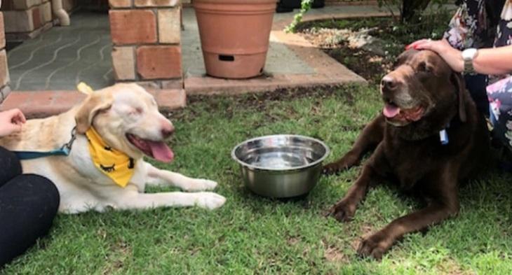 Il cane cieco viene abbandonato dalla sua famiglia all'età di 10 anni