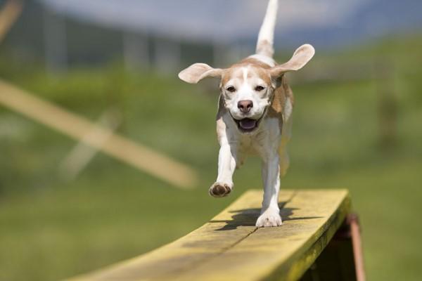 10 esercizi mentali per i cani che faranno felice Fido