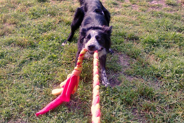 10 giocattoli fai da te per cani facili da realizzare