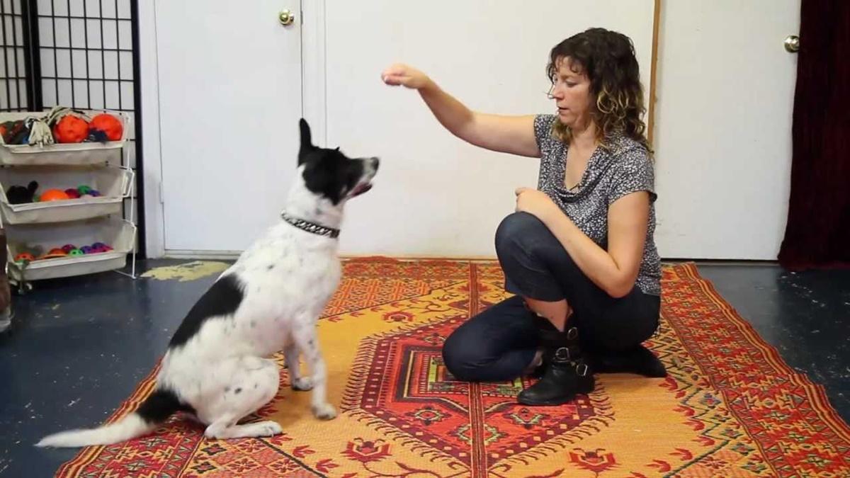 addestrare un cane in casa