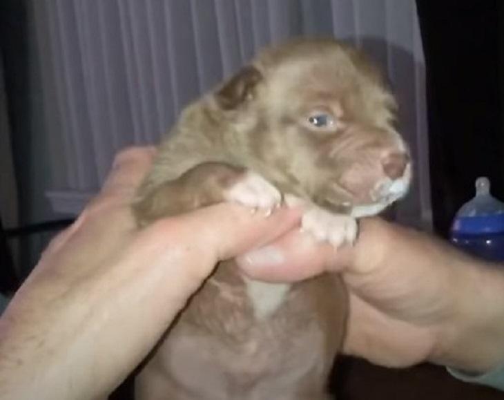 Il cucciolo rischia la vita ma un massaggio cardiaco evita la tragedia